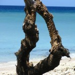 Natural wood sculpture on Gili Trawangan