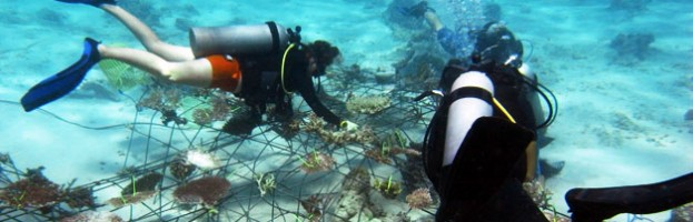 Gap year diver rocks the world