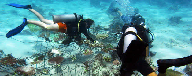 Biorock students attaching coral to their new structure at Trawangan Dive, Gili Trawangan