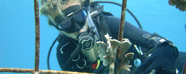 Delphine Robbe attaching coral to Biorock structure on Gili Trawangan, Indonesia