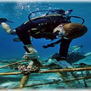 PADI IDC Indonesia Career Development | IDC + Biorock Coral Conservation program | Trawangan Dive